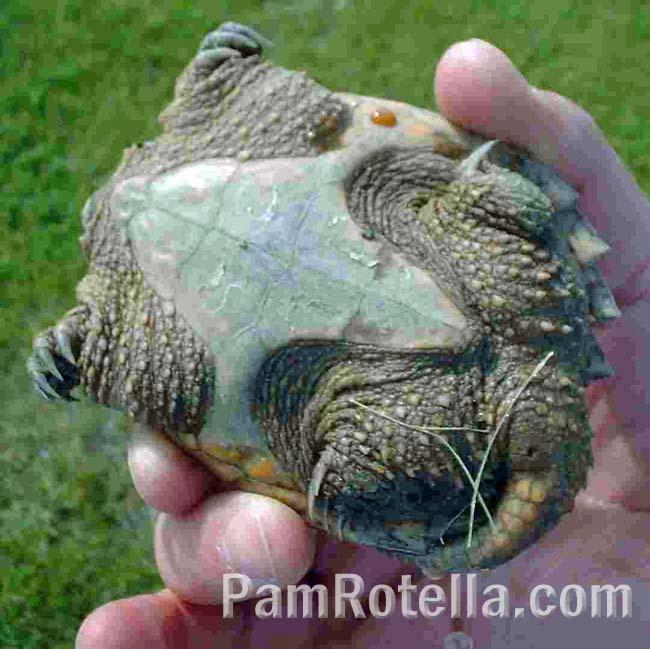 The underside of the tortoise