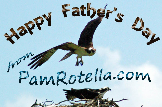 Father's Day card to readers 2011, osprey photo by Pam Rotella