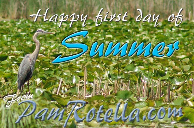 Summer card to readers 2010