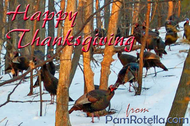 Thanksgiving card to readers (Turkeys in their natural habitat near Ithaca, New York, photo by Pam Rotella)