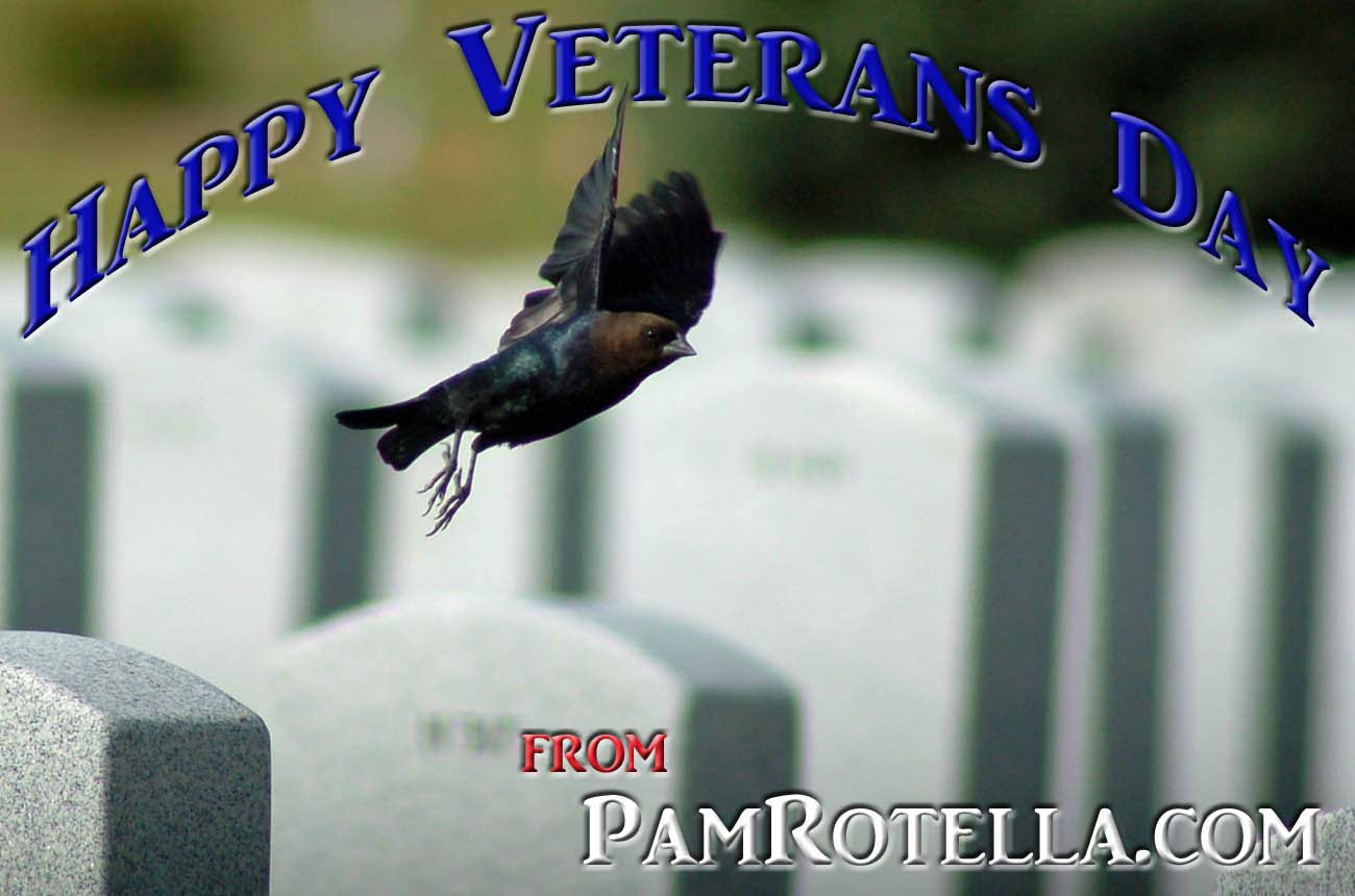 Veterans' Day e-card to readers 2012, cowbird flys over veterans' cemetery in Wisconsin, photo by Pam Rotella