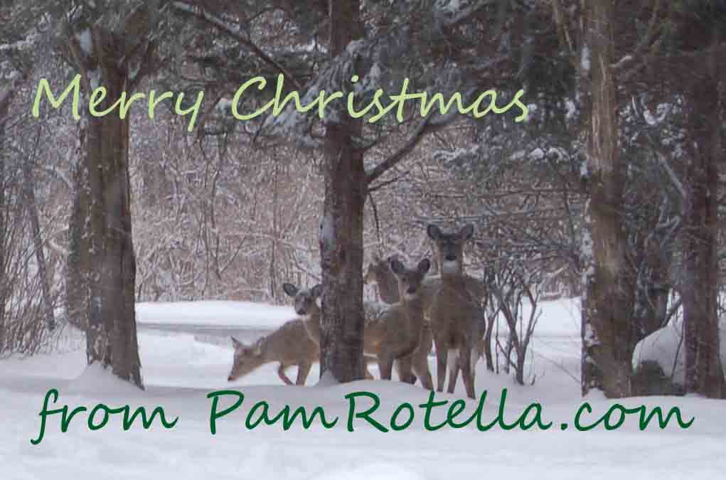 Christmas Card 2009, Deer near Ithaca, NY