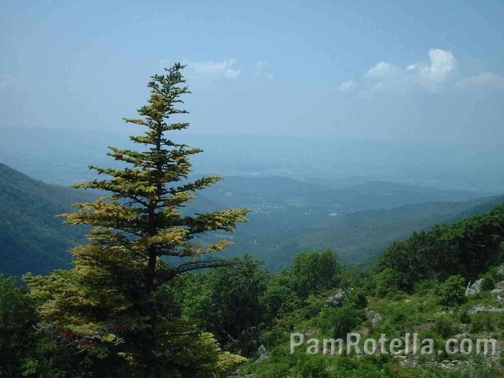 Blue Ridge Mountain scenery, photo by Pam Rotella